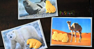 Polar bear, seal, and camel animal cookies with a picture of their real world animal