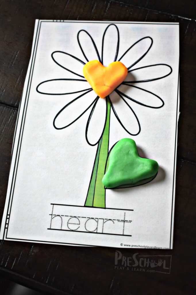 Form playdough into the flower center shape and leaf shape