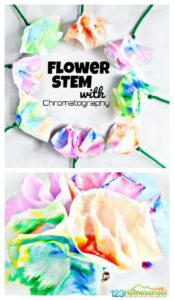 chromatography flowers