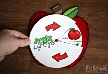 Super cute Apple Life Cycle Printable that makes a fun activity for preschoolers an dkindergartners to learn about life cycles in September