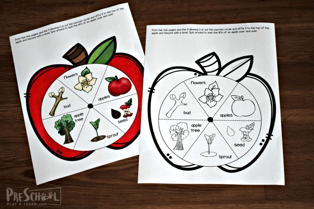 Print the Life Cycle of an Apple Tree printable in color or black and white