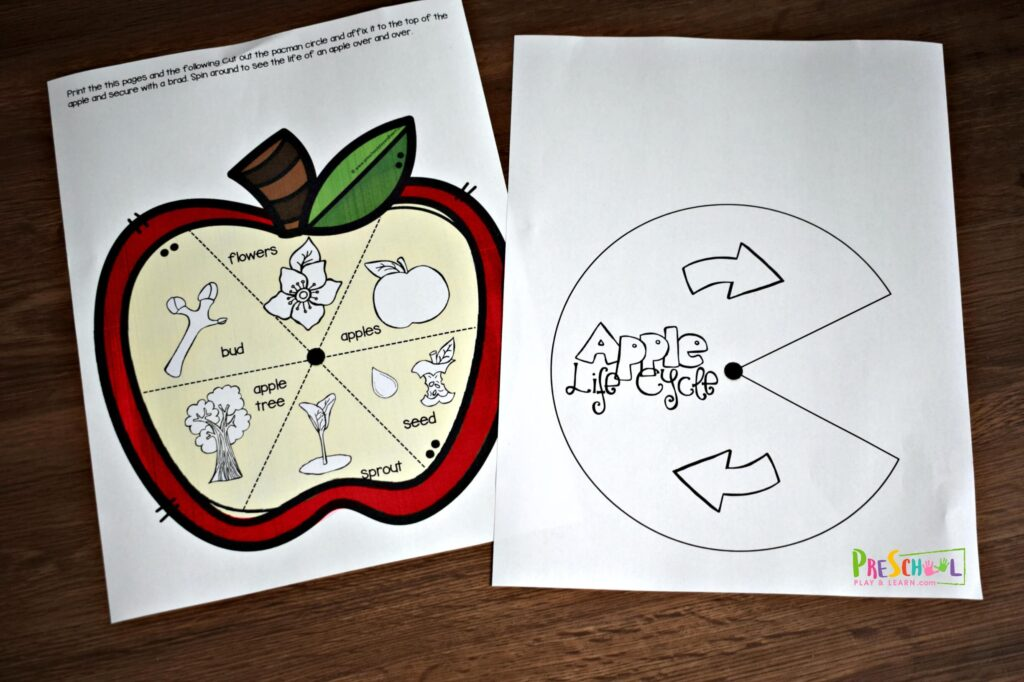 Super cute free printable apple life cycle activity for preschool, prek, and kindergarten age kids
