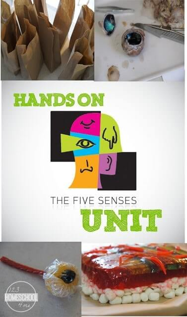 Fun, hands on 5 Senses Unit for Kids