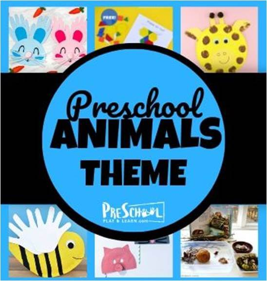 Preschool Animal Theme