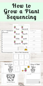 planting a seed sequencing worksheet
