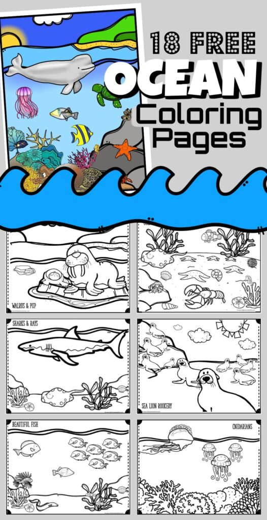 Grab your crayons and have fun going under the sea with 18 super cute Ocean Coloring Pages for kids of all ages to color and explore aquatic animals - whales, dolphins, eels, sand dollars, sea stars, fish, sharks, coral, crabs, lobster, walrus, jellyfish, squid, and more. Fun , free coloring pages for toddler, preschool, pre k, kindergarten, grade 1 and grade 2