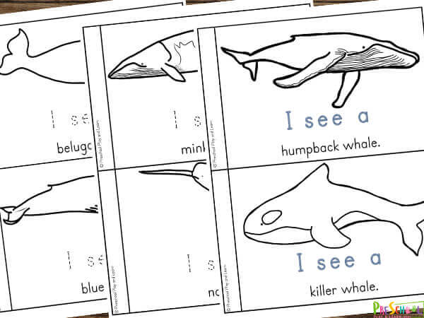 ocean themed preschool science printable where kids will learn about the different types of whales