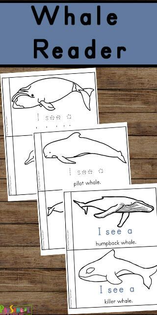 This super cute, free Whale Printable helps preschool, pre k, kindergarten and first grade students learn about whales. This color, read, and learn activity is perfect for sneaking in some fun preschool science.