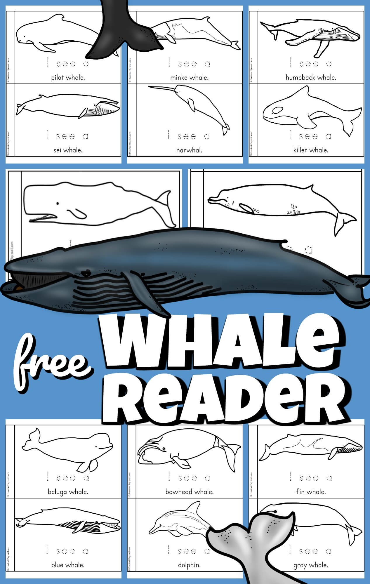 Whether you are diving into an ocean unit or your child is just curious about the largest living animal, this free whale printable is a great way to start learning about whales for kids. This super cute, all about whales for kids printable reader is perfect for preschool, pre-k, kindergarten and first grade students to learn about this gigantic ocean animal. Simply print the types of whales emergent reader to read, color, and learn with this preschool scienceandwhale activity.