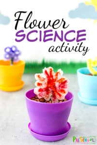 Spring is a great time to dive into this beautiful and funspring science project! Thisflower science experimentis an flower craft, flower activity, and flower science all mixed into one amazing Flower STEM activity! Thisflower activity for preschool, pre-k, kindergarten, and first grade allows children to make and grow their own flower crystals. This is a fun spring activity for kids!