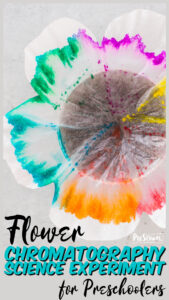Looking for a funspring science experiment, aflower activity for preschoolers, or asummer science project to add to your summer bucket list? This prettyflower chromatography is such a simpleflower experiment that will engage toddler, preschool, pre-k, kindergarten, first grade, and 2nd graders too.
