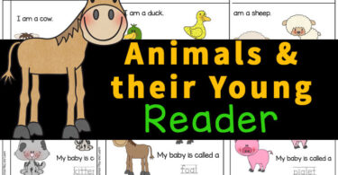 This Animals and their Young printable reader is a great way to work on reading skills while learning about animals and their babies. Use this animals and their young ones activity with preschool, pre-k, kindergarten, and first graders to learn the appropraite scientific term for each animals' young. Use this as part of a baby animal lesson plans for preschool.Simply print pdf file withanimal worksheets and you are ready to play and learn!