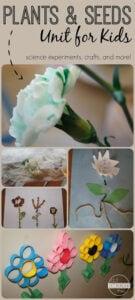 plant activities for preschoolers