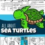 sea turtles for kids