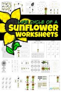 sunflower worksheets