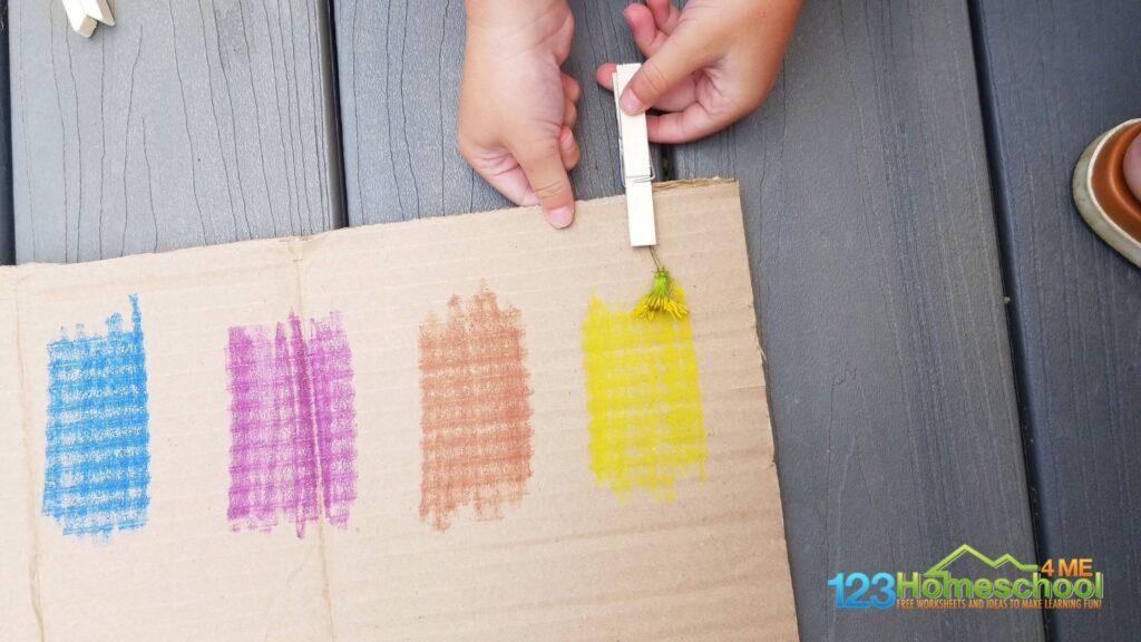 Nature Color Search for Preschoolers