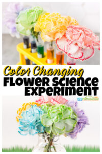 color changing flowers