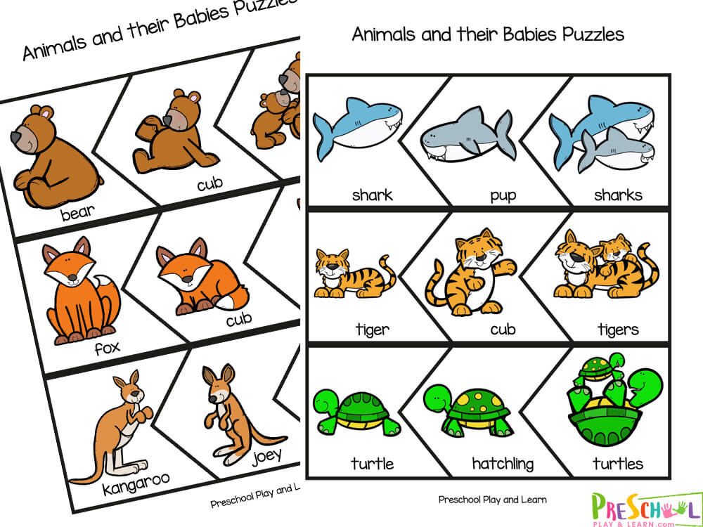 Baby animals names with pictures