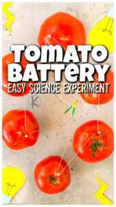 tomato battery fruit science