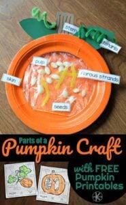 parts-of-a-pumpkin-craft-and-free-pumpkin-printables-595xh